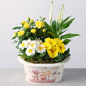 Sunshine Planter
