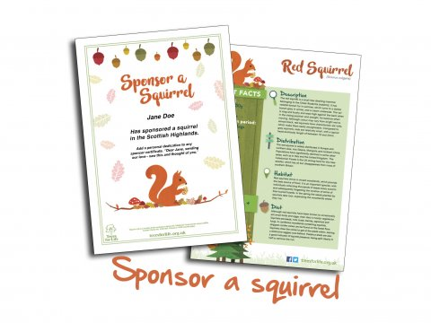 Sponsor a Red Squirrel with Trees for Life
