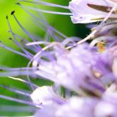 Give a membership to Garden Organic