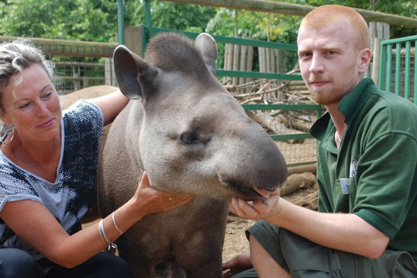 Tickle a tapir in Hertfordshire