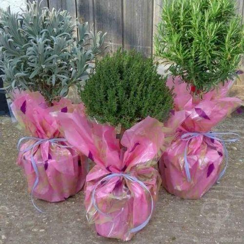 Herb Garden Gift from Tree2mydoor.com