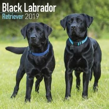 Black Labrador Retriever Calendar 2019
