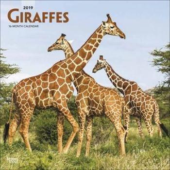 Giraffes Calendar 2019