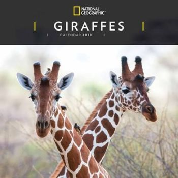 National Geographic Giraffes Calendar 2019