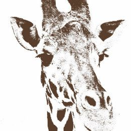 Giraffe Posters and Prints