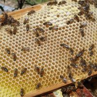 Bee Keeping in Kent