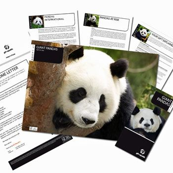 Your gift will help Pandas International support the conservation efforts to save the panda