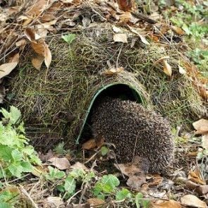 Give them something for wildlife in their garden