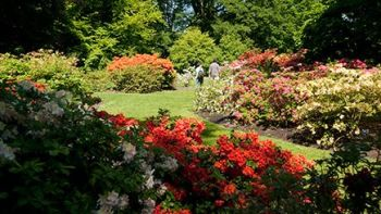Kew Gardens Private Guilded Walking Tour and Admission for Two