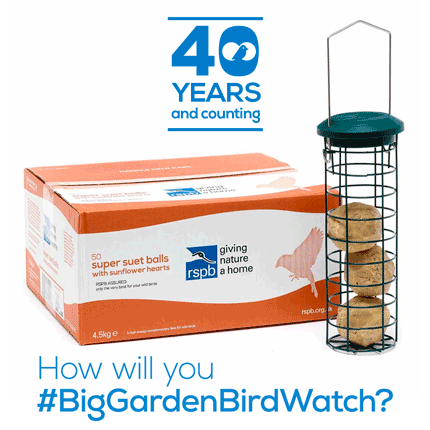 Big Garden Birdwatch suet and feeder offer 2019