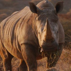Give a Save the Rhino Membership