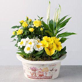 Sunshine Planter