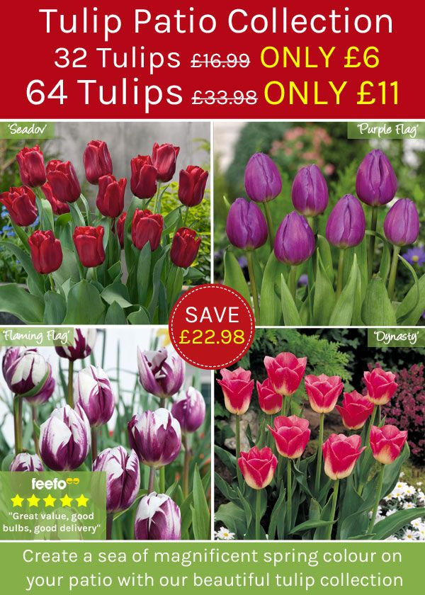 Treat yourself to Thompson & Morgan's Tulip Patio Collection!