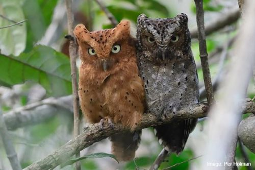 Protecting 810 acres in Kenya for animals such as these beautiful owls