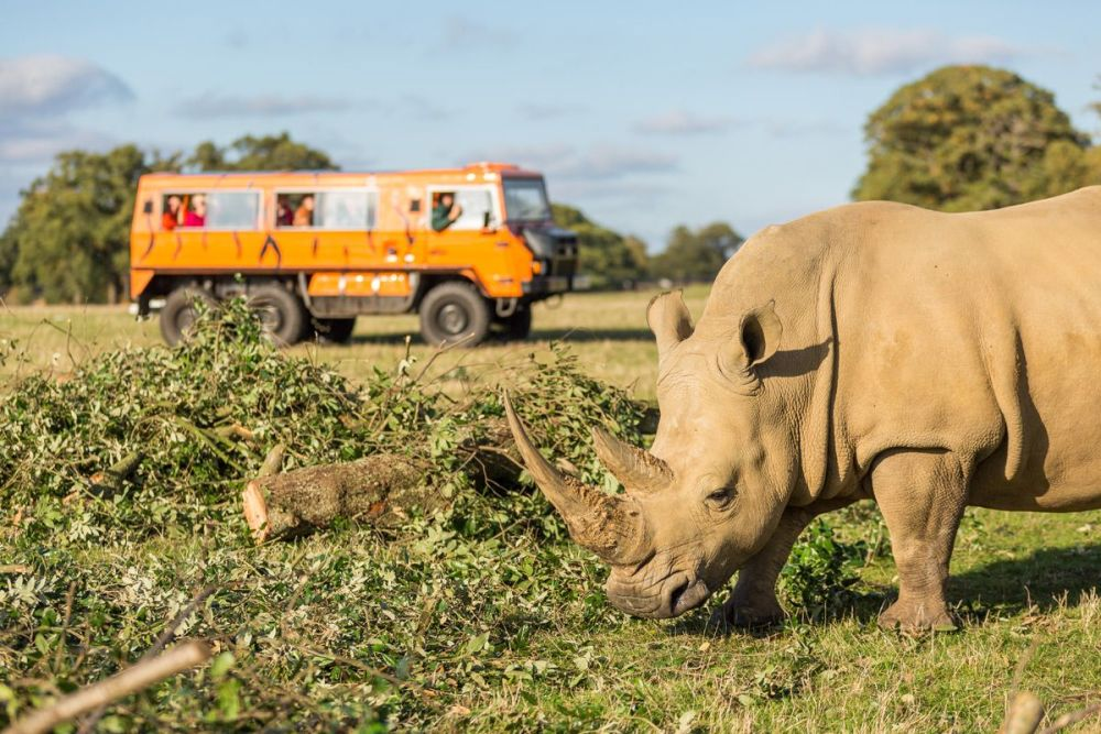 Get close up to one of the world's largest land animals, the rhino