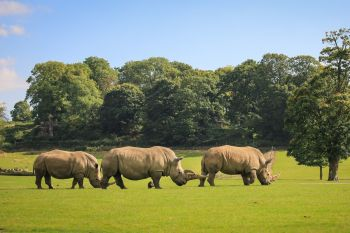 Upclose Rhino Encounter at Woburn Safari Park