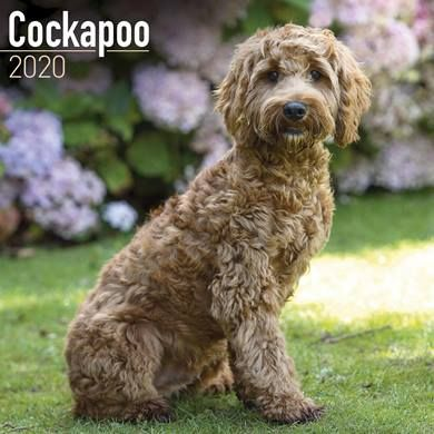 The selected products in this offer include this Cockapoo 2020 Calendar...