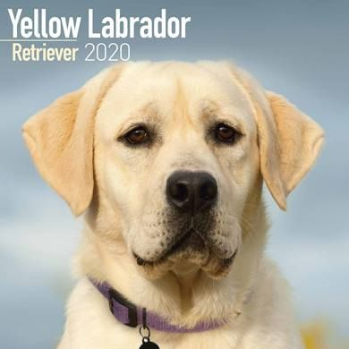 If you're a labrador lover, you could buy this calendar from the CalendarClub which is part of this offer :-)
