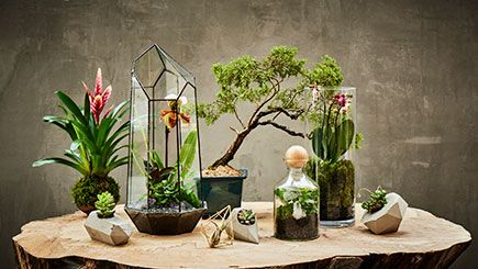 Bring nature indoors with a Terrarium workshop