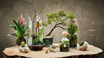 Bring nature indoors with a Terrarium workshop