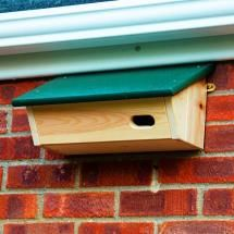 This nest box is for swifts