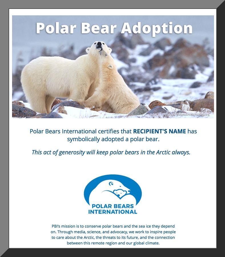 Adopt a Polar Bear from Polar Bears International