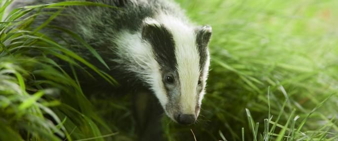Adopt a species from a Welsh Wildlife Trust or give a membership as a gift!
