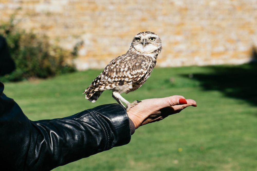 There's 50% off offer at Virgin Experience Days on this Introduction to Owl Handling experience for two