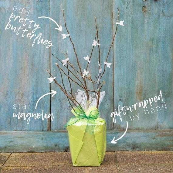 Tree2mydoor Mums Day 2020 Star Magnolia Tree Gift