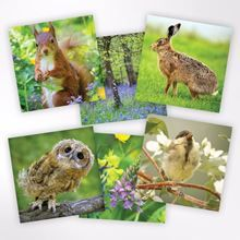 Notecards and notelets from the Woodland Trust Shop