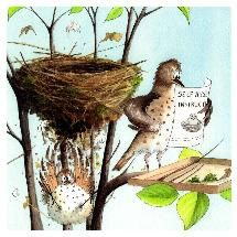 View the range of cards from the RSPB Shop