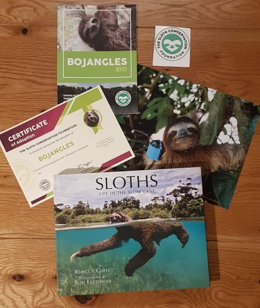 Adopt a Sloth from the Sloth Conservation Foundation