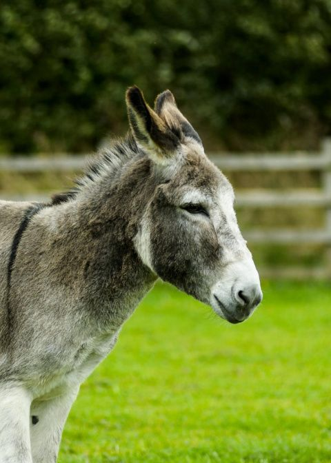 Adopt Eyeore from the Donkey Sanctuary