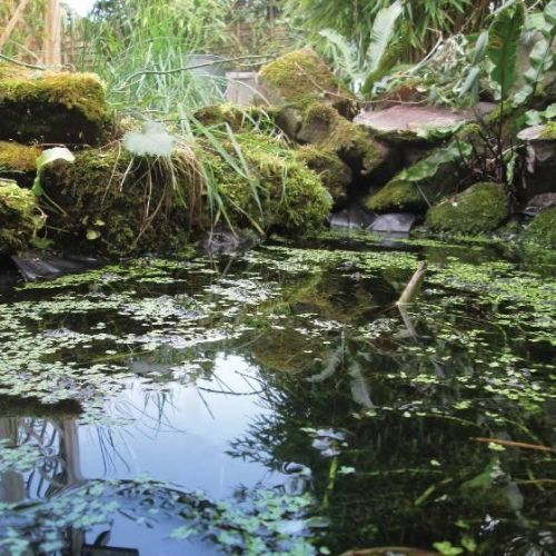 Give your wildlife a pond liner kit - from 2m x 2m