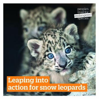 Adopt a Snow Leopard with the PTES