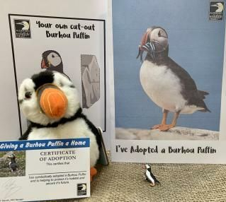Adopt a puffin with the Alderney Wildlife Trust