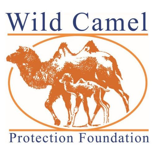 Visit the Wild Camel Protection Foundation's website