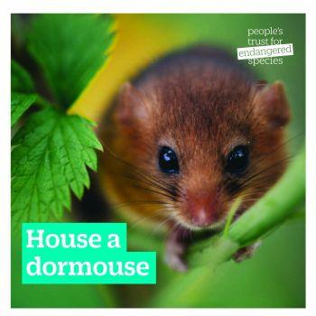House a dormouse