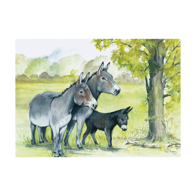 The Donkey Sanctuary Shop has a range of greeting cards