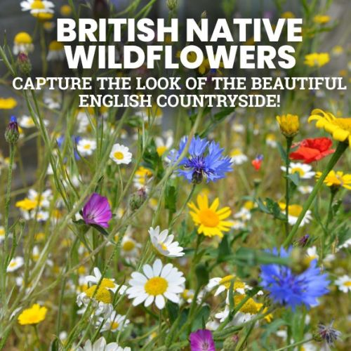 Take a look at Suttons British Native Wildflowers - put colour into your garden!