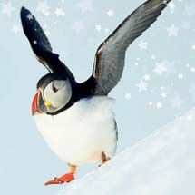Snow Fun Christmas Cards from the RSPB