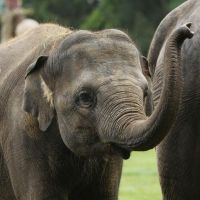 Help the animals at ZSL London Zoo and Whipsnade Zoo