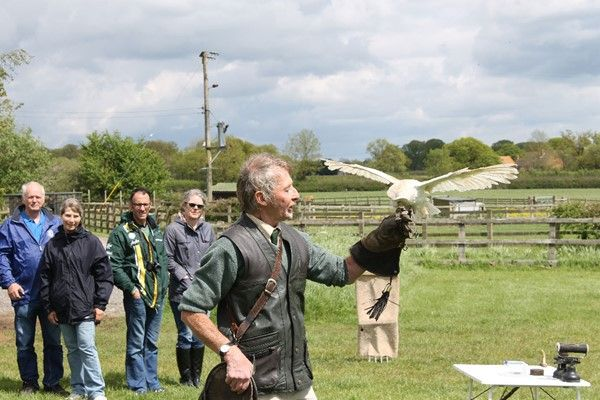 What about a Bird of Prey Falconry Experience