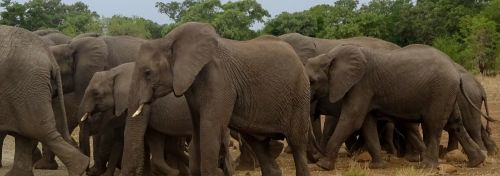 The project means that conflict between elephants and wildlife is avoided so the elephants are safer