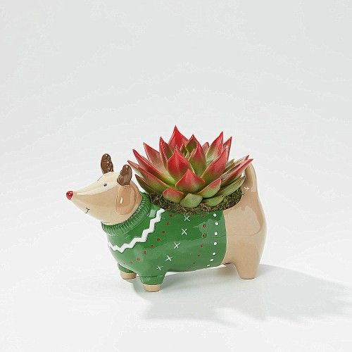 The Dasher Dog Planter comes in a resuable ceramic planter