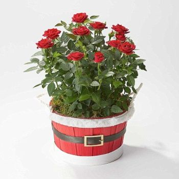 Red Rose Santa Planter