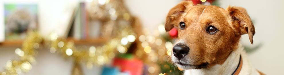The RSPCA has lots of information and advice for pet owners at Christmas time
