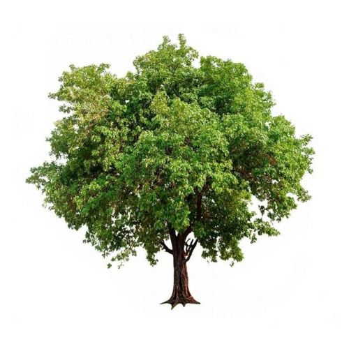 Spend over £40 and Green People will plant a tree on your behalf