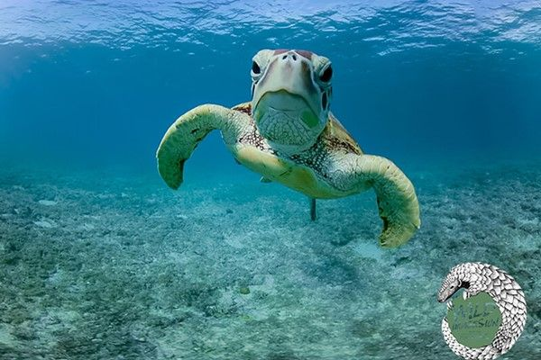 Virtual Exploration of the Marine World