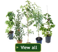 Click here to see Tree2mydoor.com's full range of fruit trees